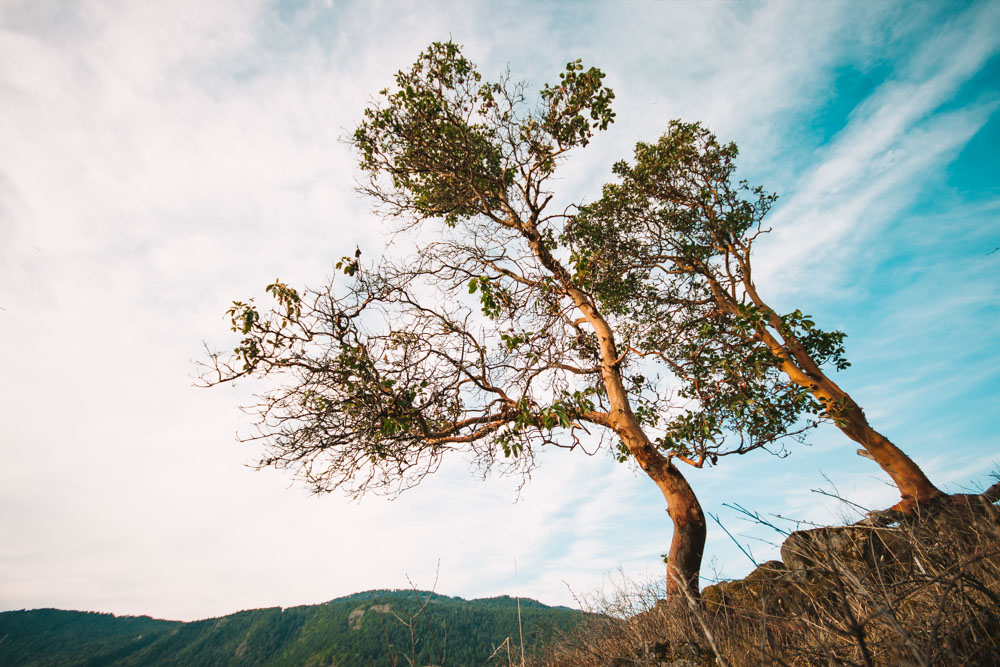 Arbutus Tree Gowlland Todd Provincial Park Landscape Photography
