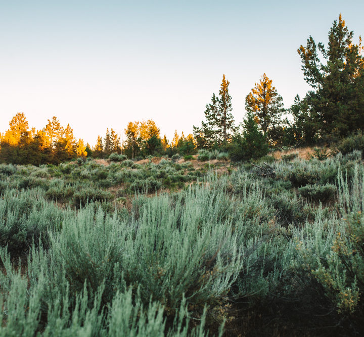 Oregon // 2017