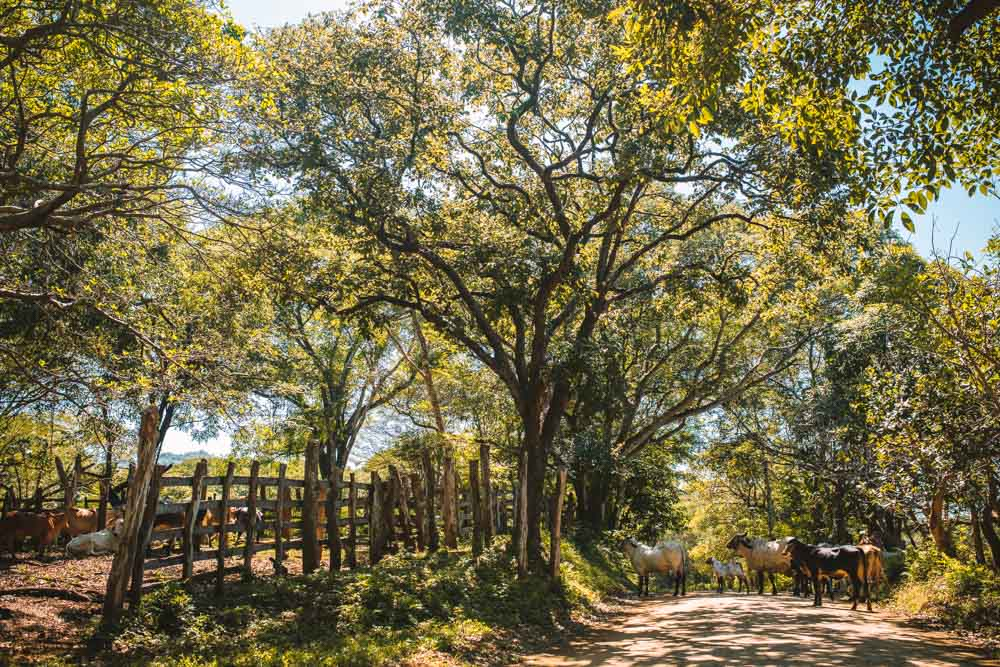 Road to Playa Avellanas