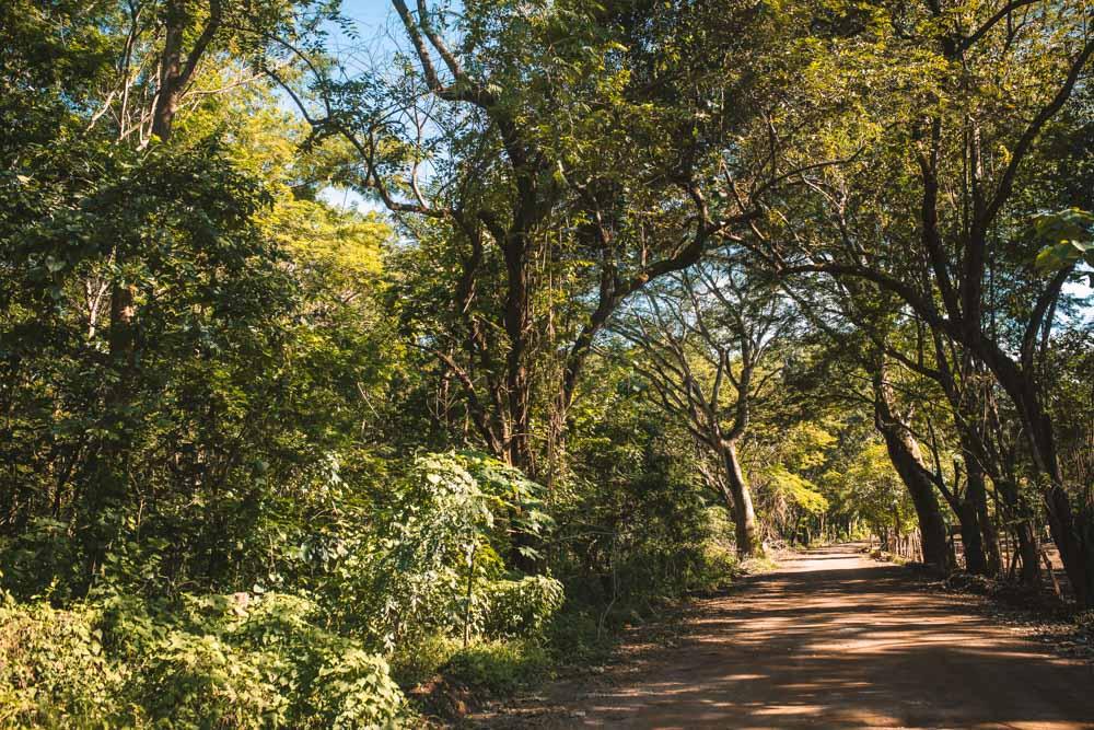 Road to Playa Grande Costa Rica